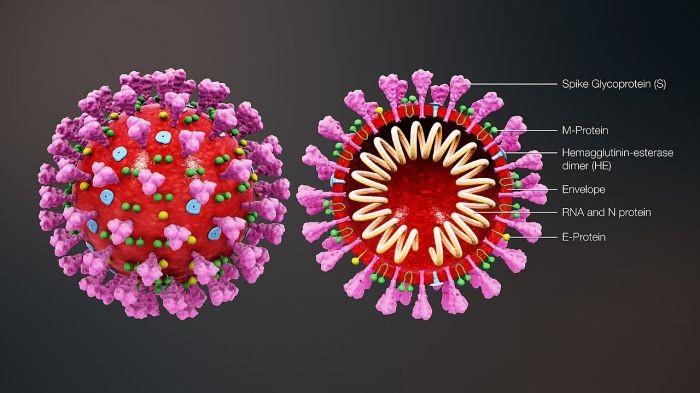 coronavirus_structure